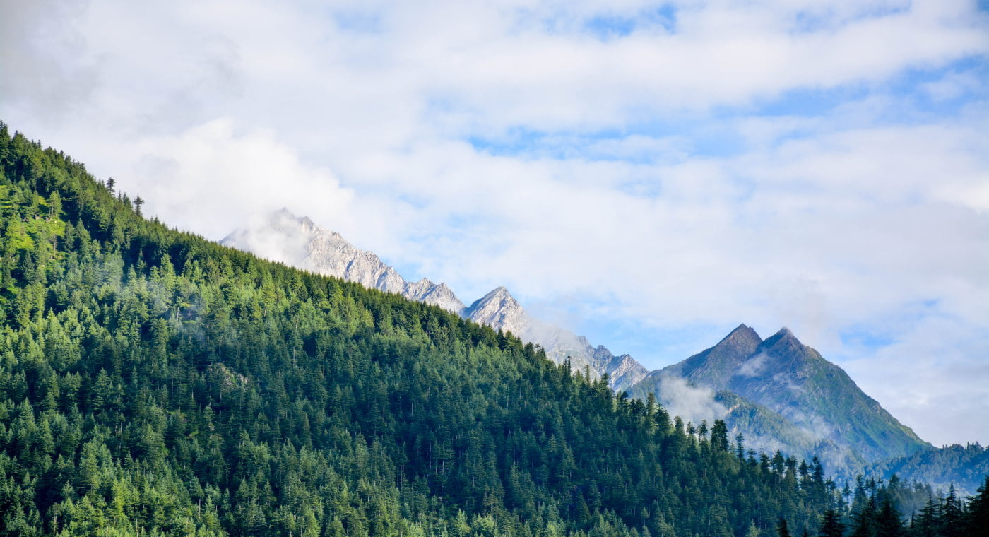 View of forest, mountain and sky