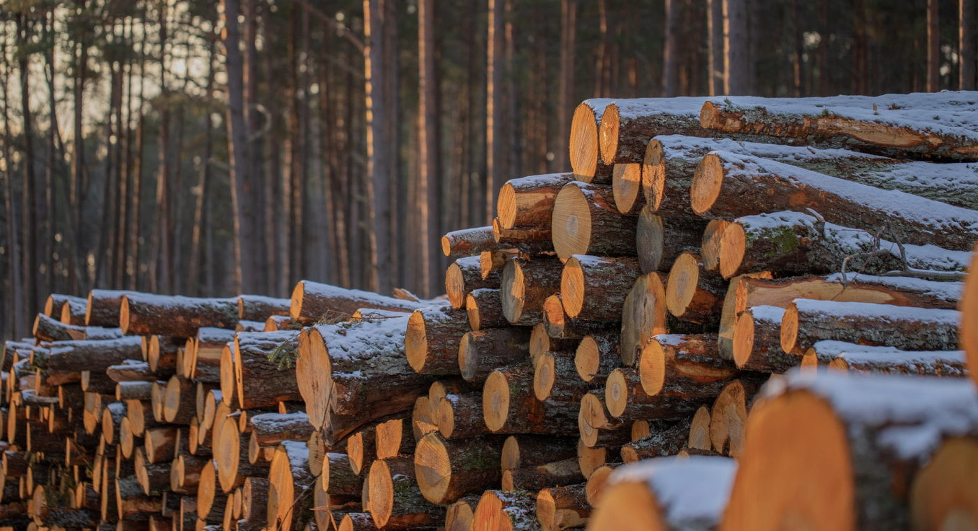 Stacked logs in Estonian forest