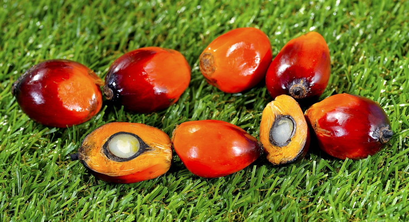 Palm fruits on grass
