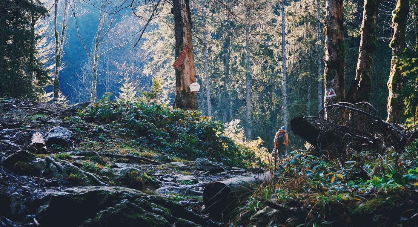 Forest in Romania