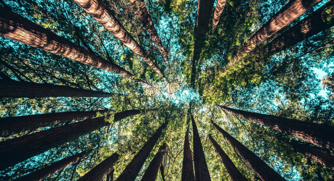 Worms eye view of the tree canopy